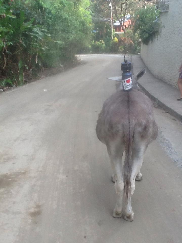 Jenny on Donkey