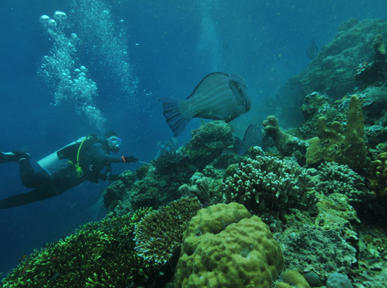 Plongée - Pulau Perhentian