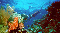 Barriere de Corail - Cairns - Etat du Queensland