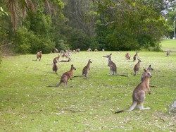 Morisset Park - Etat Nouvelle Galles du Sud