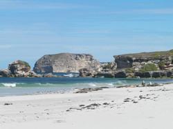 Seal_Bay,_Kangaroo_Island-_Etat_Australie_Méridionale