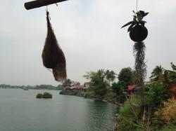 Mékong - 4000 îles