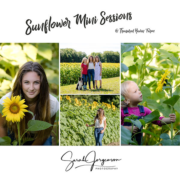 Sunflower Card FRONT.jpg