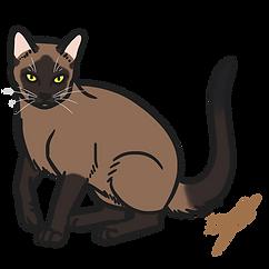 BURMESE CAT.png