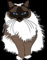 birman cat.png