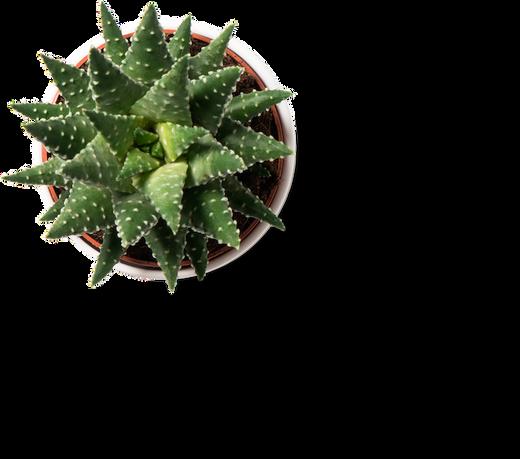 Planta 2.png