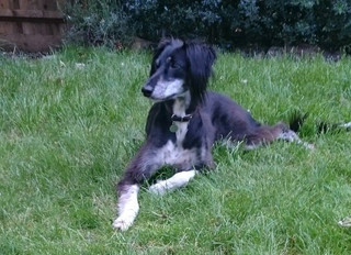 JOIN OUR ONLINE THINKING-DOG PROGRAMME