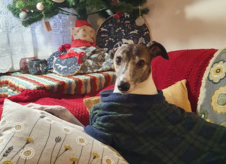 FESTIVE FIZZ OR FESTIVE TIZZ? MAKING CHRISTMAS EASY FOR OUR DOGS