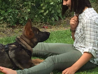 SOCIAL ISOLATION: IT'S RAINING KIDS AND DOGS