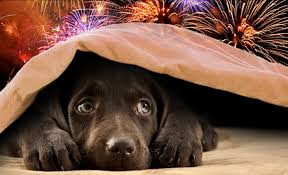 FIREWORK FEAR AND FEAR of BEING ALONE
