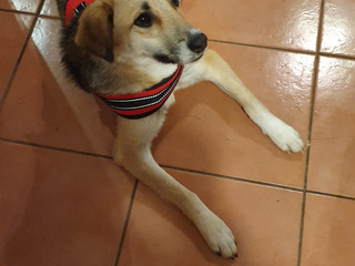 HOW TO SETTLE A ROMANIAN RESCUE INTO HER NEW HOME