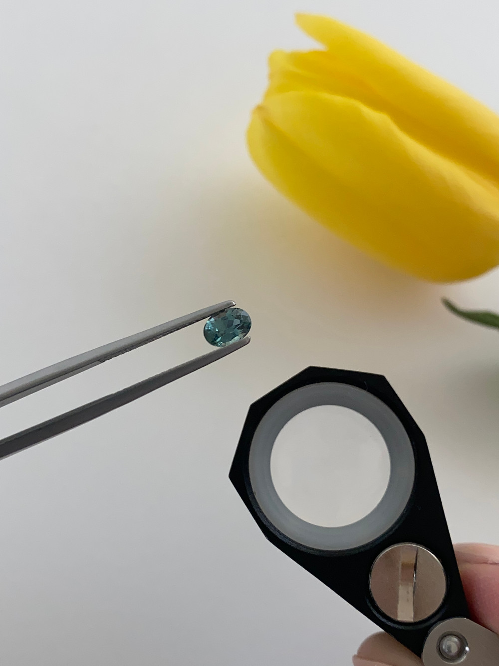 loose oval blue green teal sapphire held in tweezers, hand holding a loupe, next to a yellow tulip, on a white background
