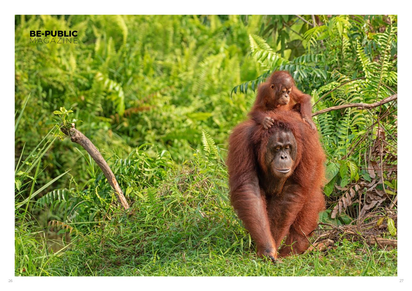 Borneo_obalka