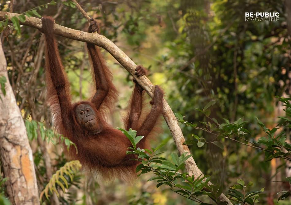 Borneo_fotografie