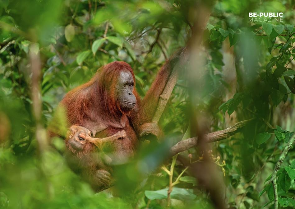 Borneo_casopis