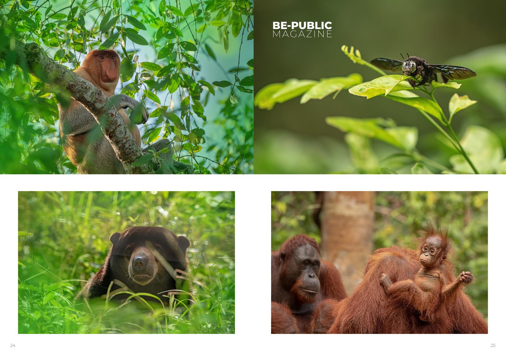 Borneo_animals