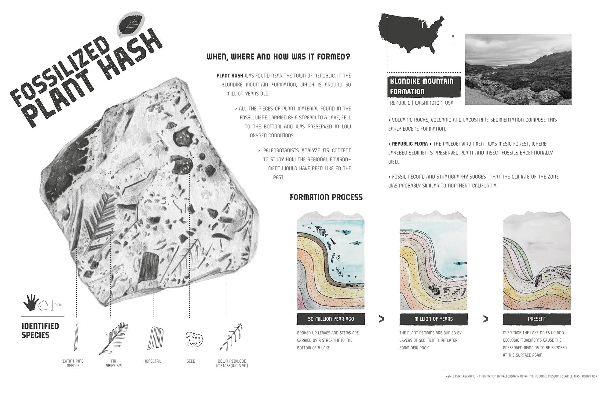 Infografía Plant Hash