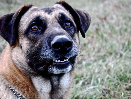 Il mondo di Clyde: l'aggressione difensiva nel cane