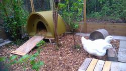 Budget Duck House