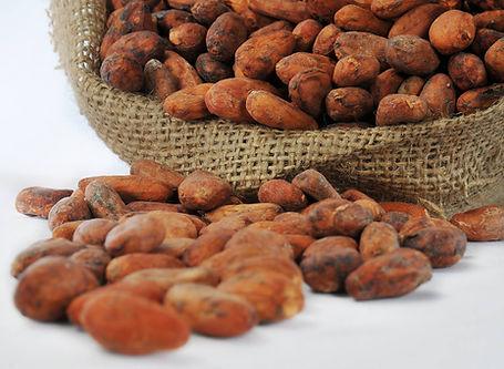 cacao01.jpg