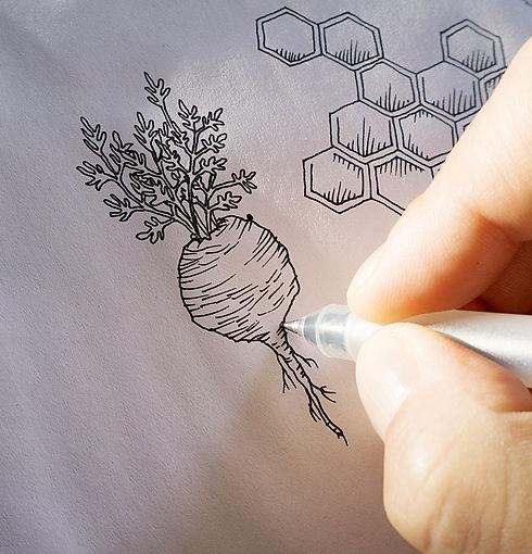 Identité visuelle et packaging pour Vitalfort / illustrations des plantes