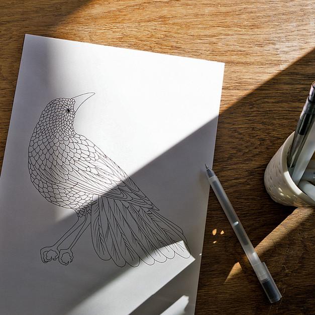 Illustration à l'encre de Chine / Oiseau bleu