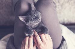 Cute Kitten Pic 1a