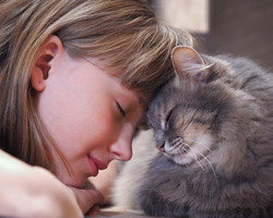 Cat and girl nose to nose