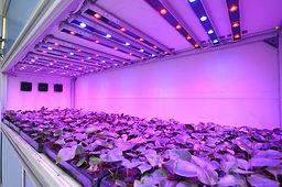 Energy Efficient Plant Factory