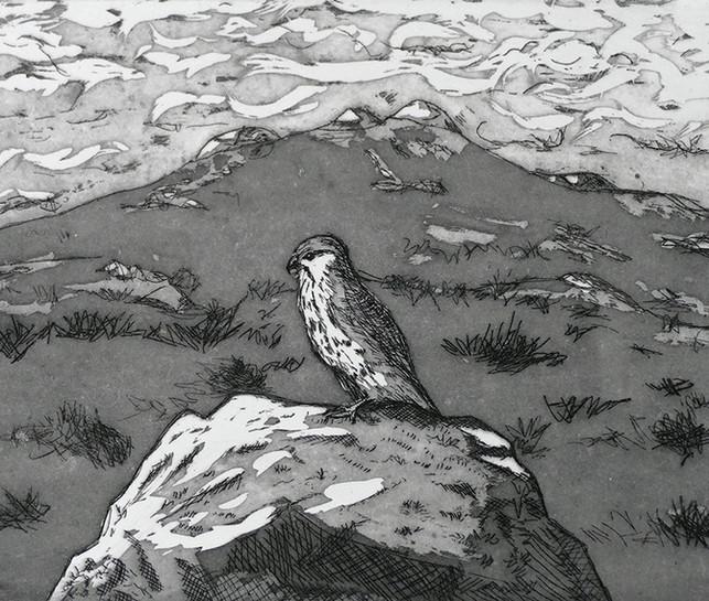 Kestrel Watching