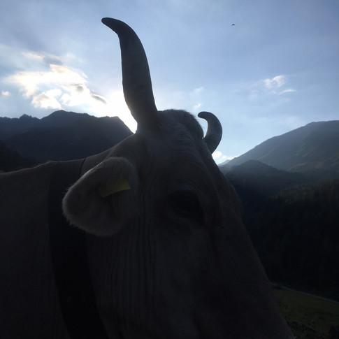 BiohofStuls_Kurz vor Sonnenaufgang im Va
