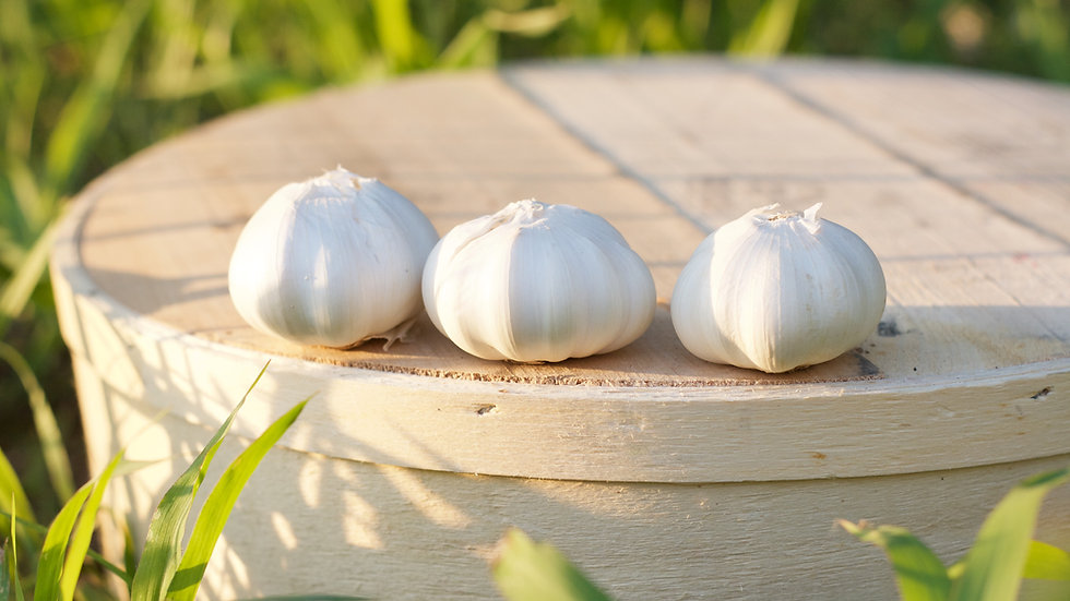 Garlic [4 pts]