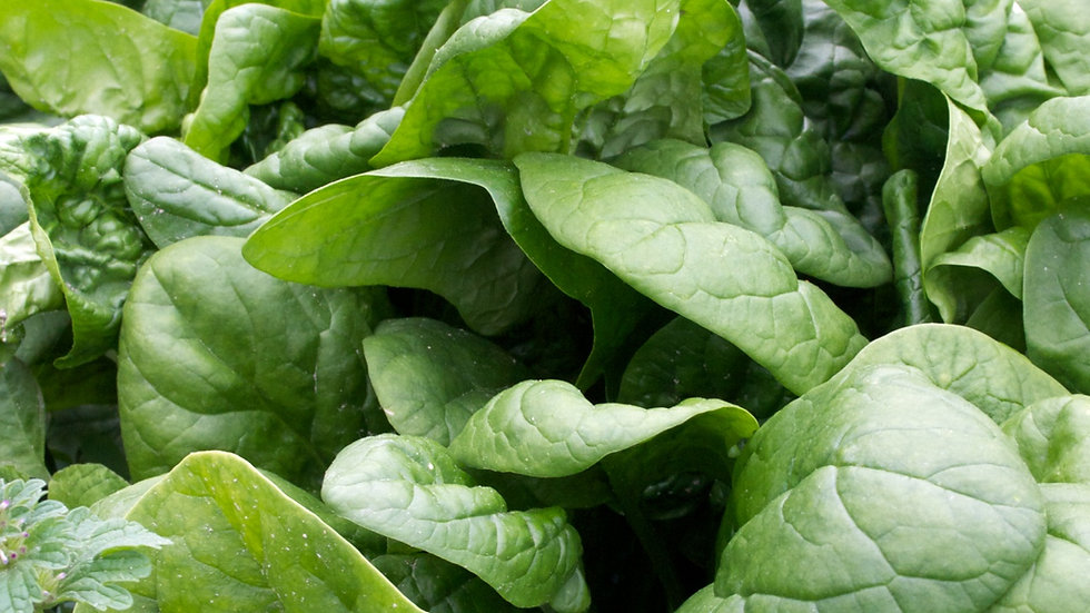 Spinach [2to5pts]