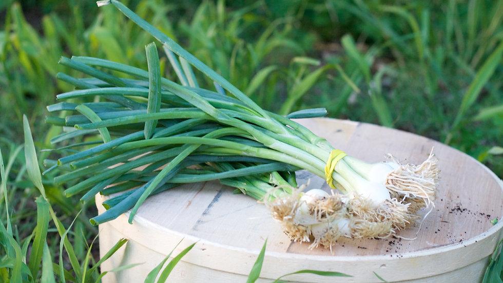 Green Onions [2pts]