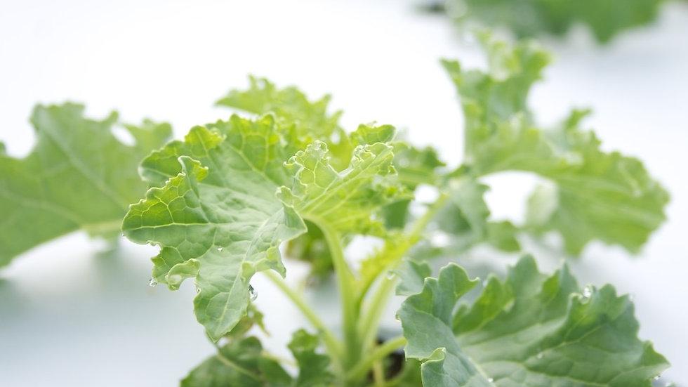 Kale [2pts]