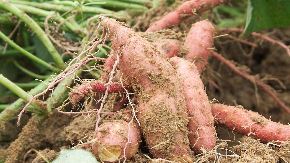Sweet Potatoes [2pts]