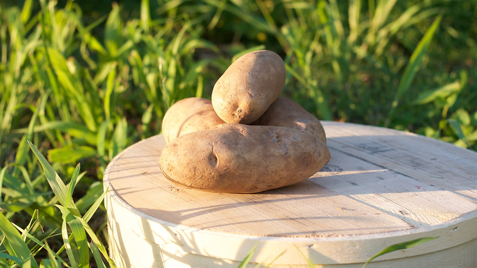 Russet Potatoes [2pts]
