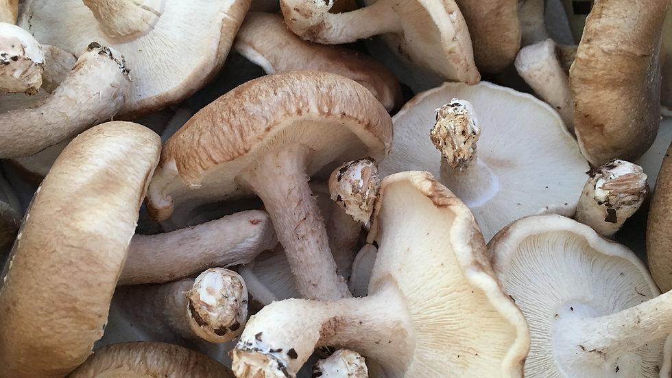 Shitake Mushrooms [3to5pts]