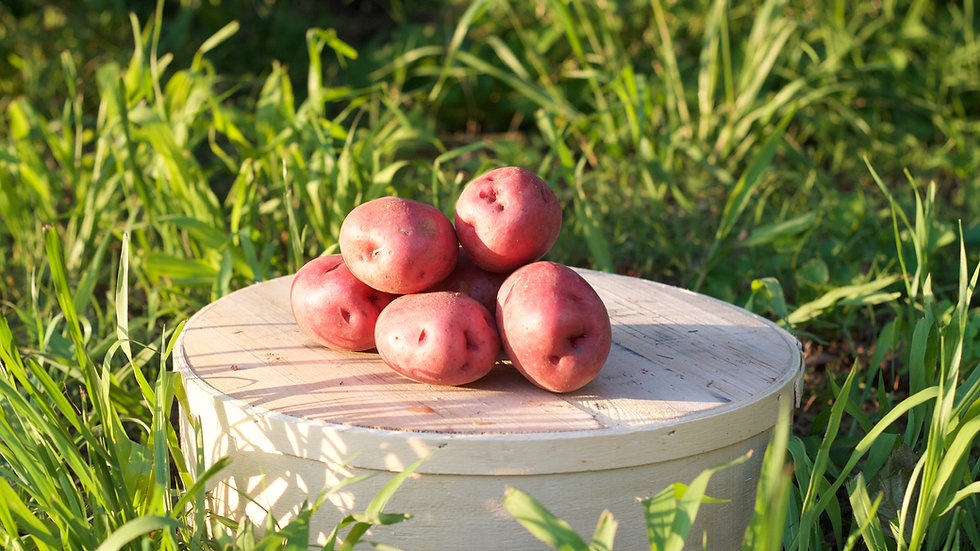 Red Potatoes [2pts]