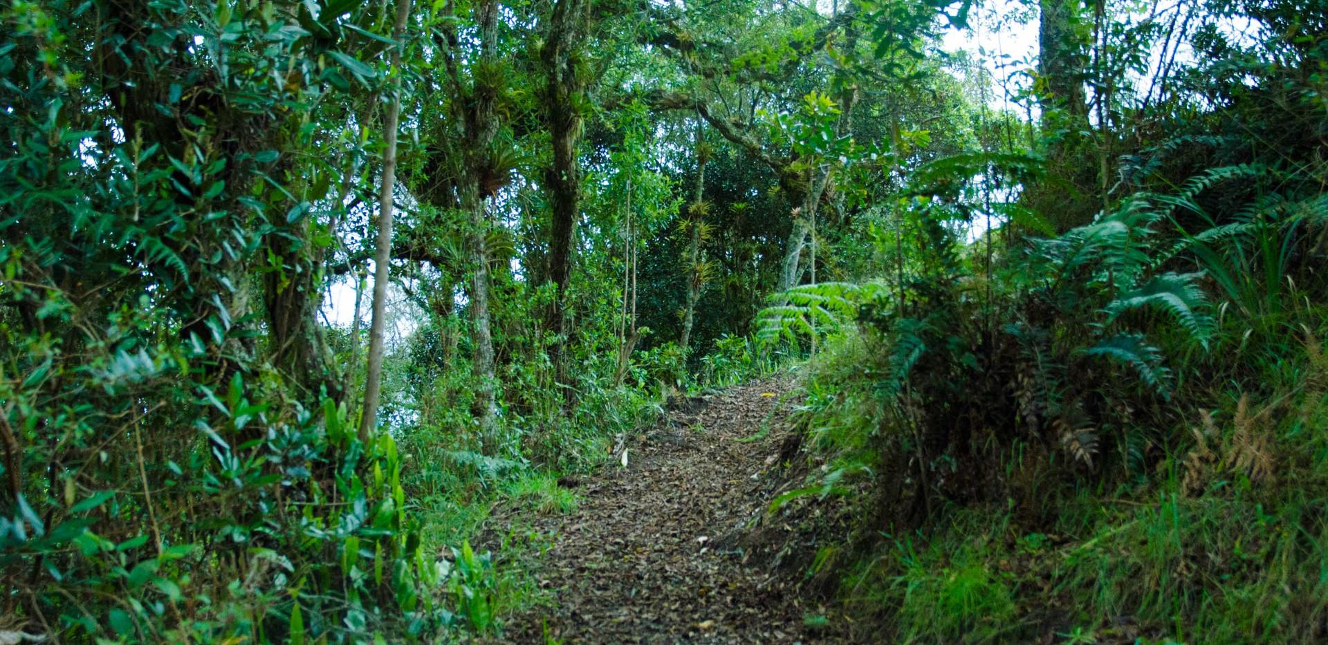 walking trails finca corazon 3.jpg