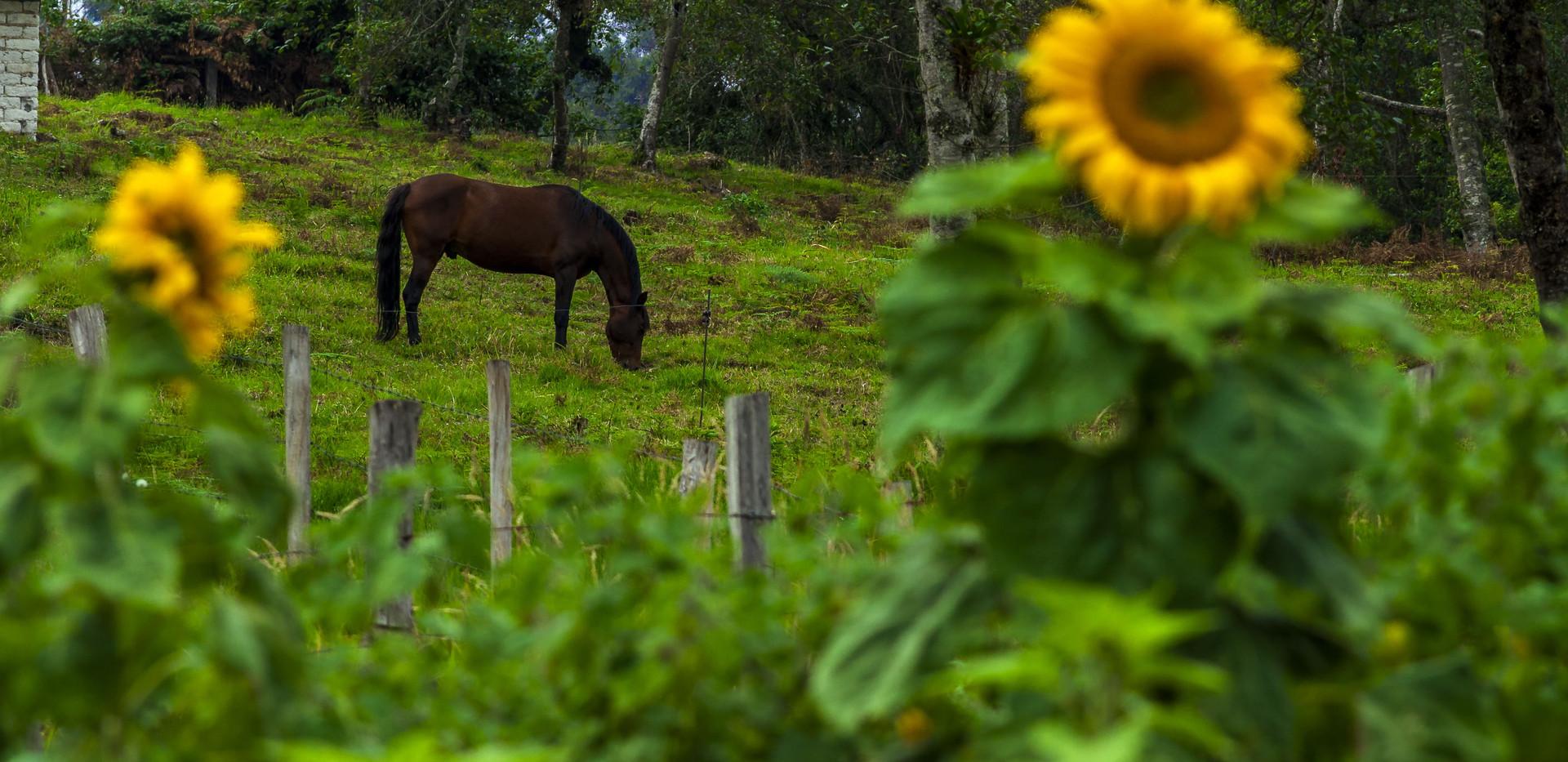 Grandioso Horse Finca Corazon.jpg