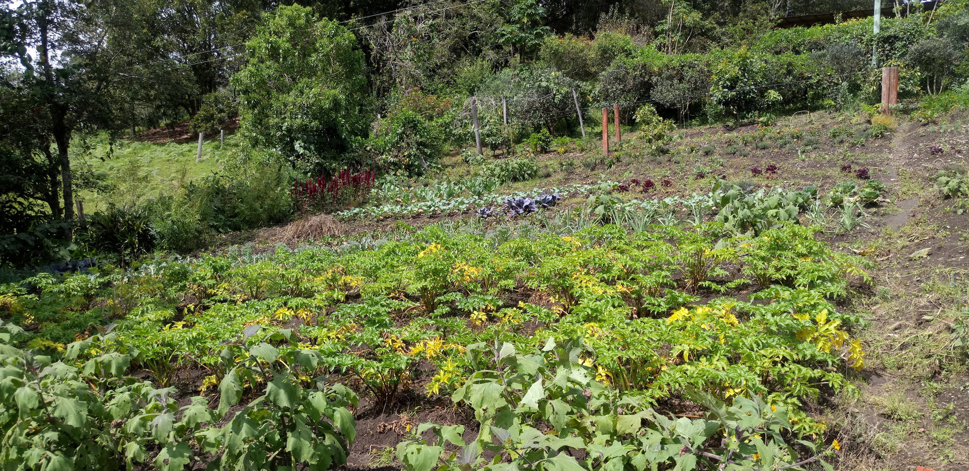 organic garden glamping finca corazon 1