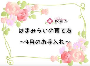 スクリーンショット 2019-05-13 午前11.42.26_edited.p