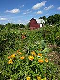 Garden Image 1.jpg