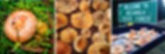 Saffron milk cap Lactarius deliciosus