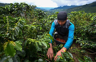 GettyImages-1146667212_ColombiaCoffee_we