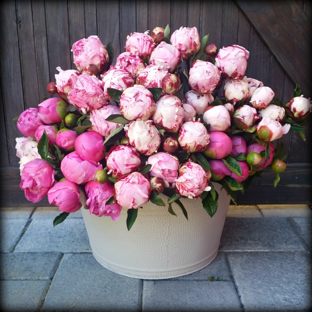Rustic Bucket of Peonies, Posybloom boutique