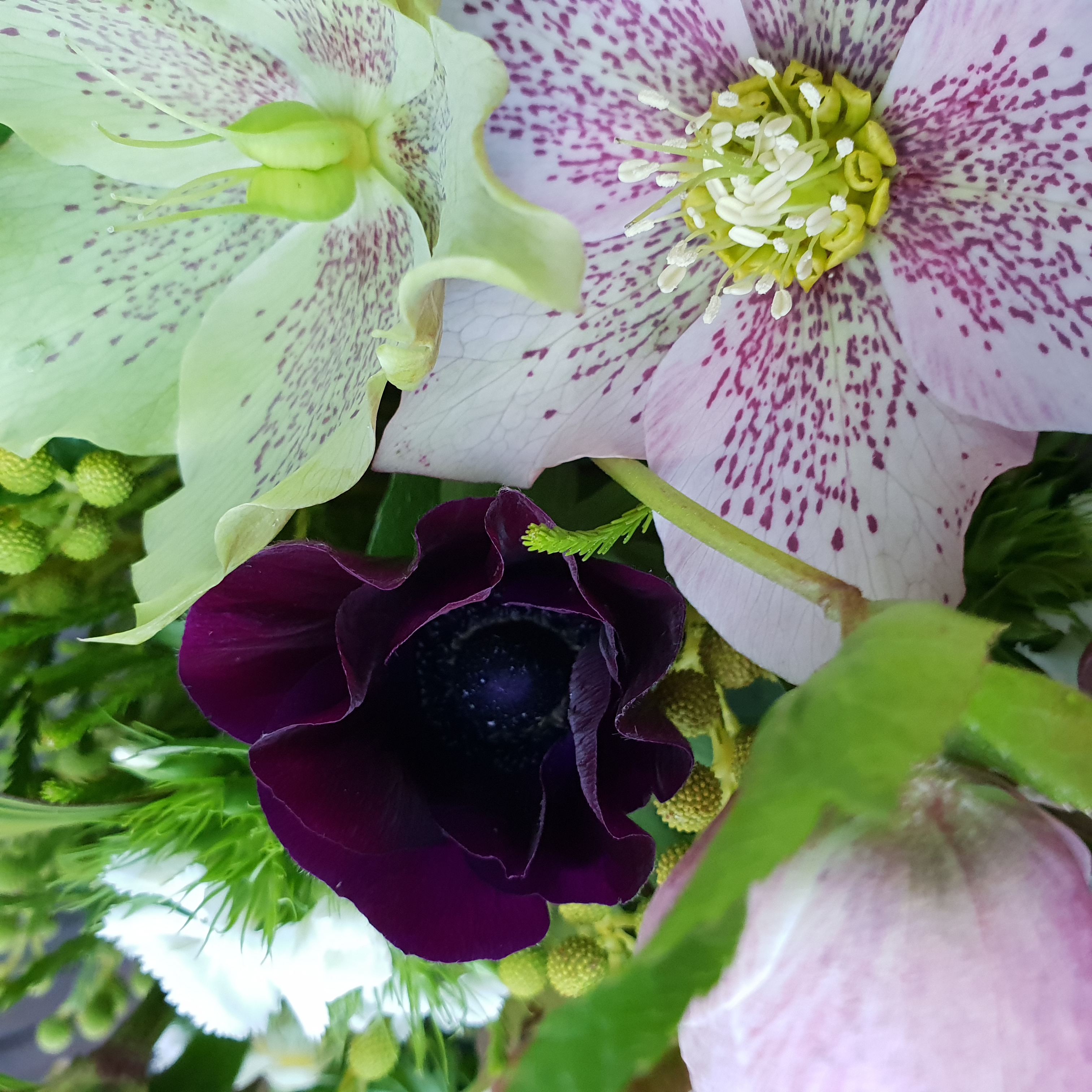 Anemone and Hellebore Bouquet