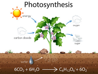 JESUS, PHOTOSYNTHESIS AND REDEMPTION