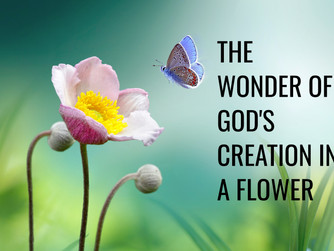 THE WONDER OF GOD'S CREATION IN A FLOWER